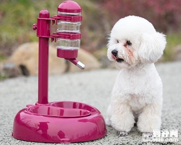 炎热夏天饲养 狗狗需要注意那些问题--成犬饲养
